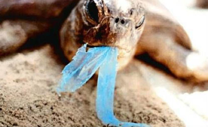 Las colillas de cigarro, taparroscas, corcholatas, botellas de plástico y popotes, son los desechos que más se encuentran. (Contexto/Internet)