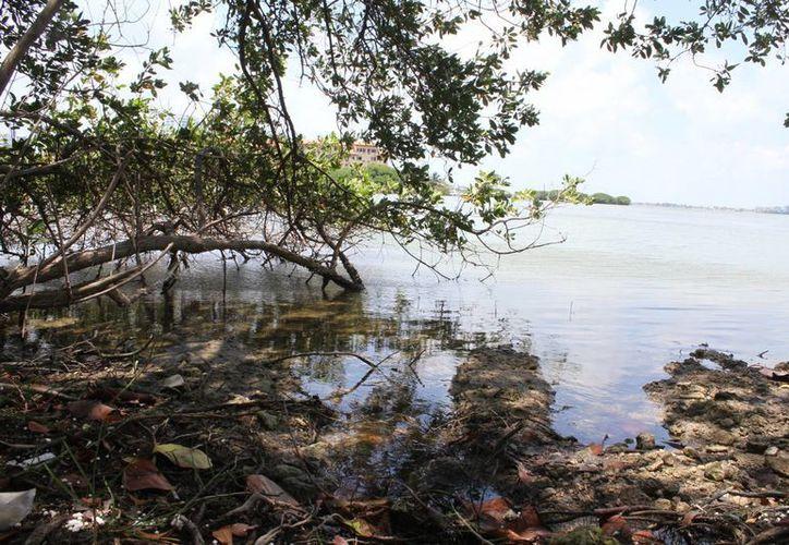 Planean  recuperar la vegetación en la laguna Nichupté. (Sergio Orozco/SIPSE)