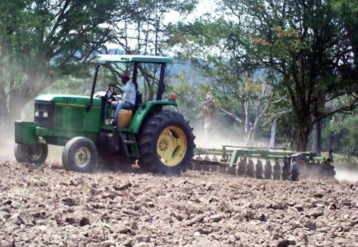 El municipio pretende mecanizar tierras en desuso para hacerlas productivas.  (Javier Ortiz/SIPSE)