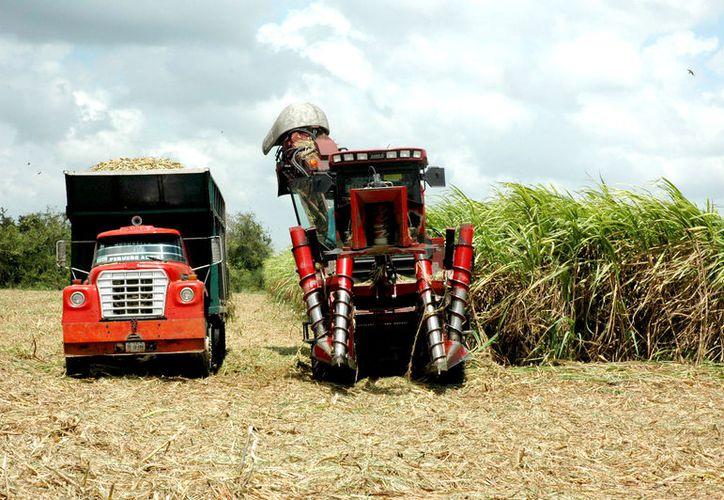 El Kilogramo de Azúcar Recuperable Base Estándar se desplomó por el mal trabajo de comisionados, cabos y cortadores.