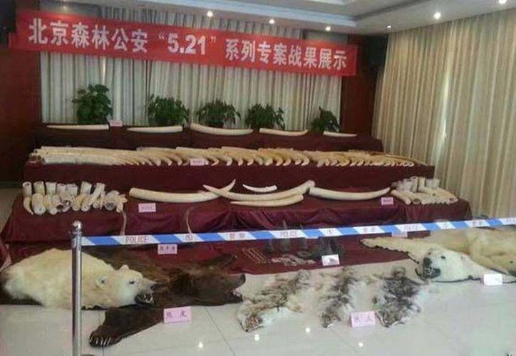 Artículos confiscados a una importante red de contrabando de vida silvestre en Beijing. (traffic.org)