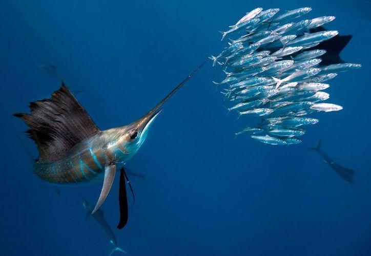 Los pescadores isleños ofrecen las actividades marítimas a los turistas. (Contexto)