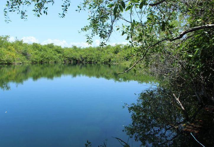 Son alrededor de 20 cenotes los que reciben la mayor cantidad de visitas. (Foto: Sara Cahuich)