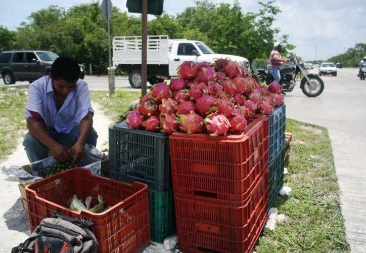 La pitahaya despierta interés en Vietnam. (Milenio Novedades)