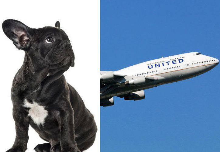 Un perro murió a bordo de un avión de United Airlines. (El Mundo)