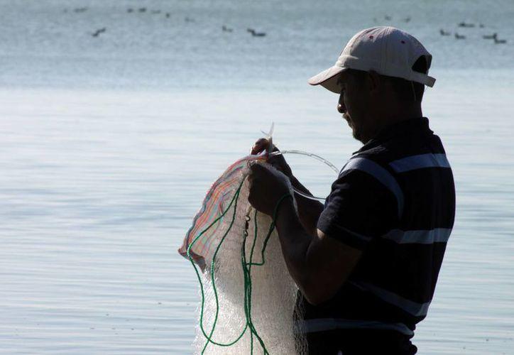 A diferencia de otras cooperativas con permiso de captura de langosta en aguas de Quintana Roo, en el sur de la entidad la temporada culminará en su totalidad. (Ernesto Neveu/SIPSE)