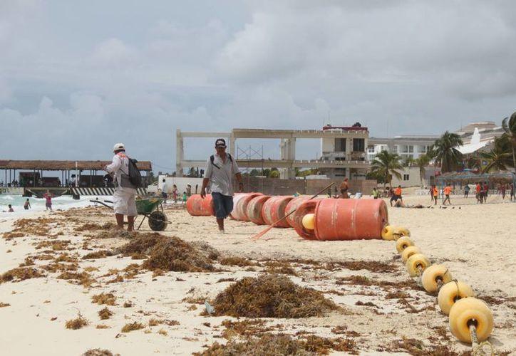 Unos 40 trabajadores se encargan de levantar y enterrar el sargazo que prolifera en las playas por las condiciones climáticas. (Daniel Pacheco/SIPSE)