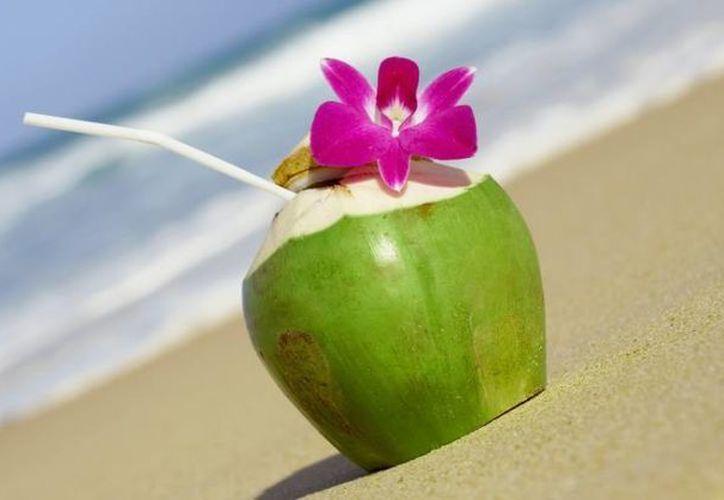 El coco, al estar en una posición preferencial en la palmera, actúa como un filtrador natural de agua. (Contexto/Internet)