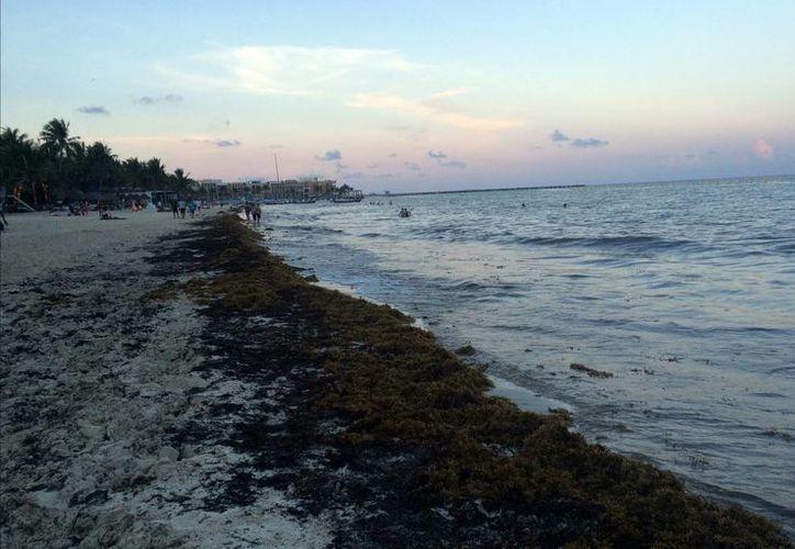 Los alumnos darán otro uso al alga marina, que meses atrás llegó de manera masiva a las costas del Estado. (Cortesía/Notimex)