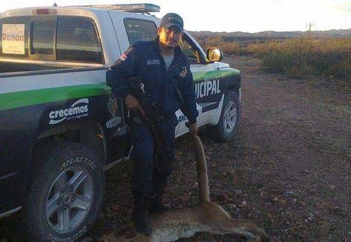 Policía de Peñón Blanco, Durango, cazó un puma pequeño y lo presumió en Facebook. (Milenio)