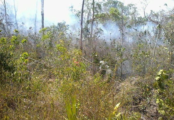 Para el combate del incendio participan alrededor de 50 elementos. (Raúl Balam/SIPSE)