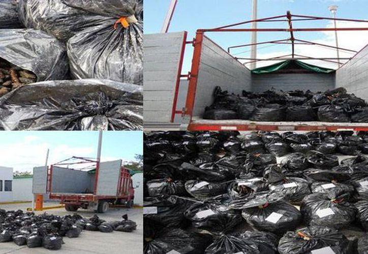 La Procuraduría General de la República detuvo un camión con 182 bolsas que contenían pepino de mar. (PGR)