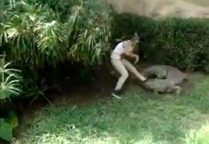 """Una adolescente desafió la seguridad del Parque la Pastora en el municipio de Guadalupe dónde se """"aventó"""" a la fosa de los cocodrilo para intentar tocar a uno de los reptiles, lo que por poco ocasiona que su pie sea atrapado por las fauces del animal en cautiverio. (lqnsnoticias.com)"""