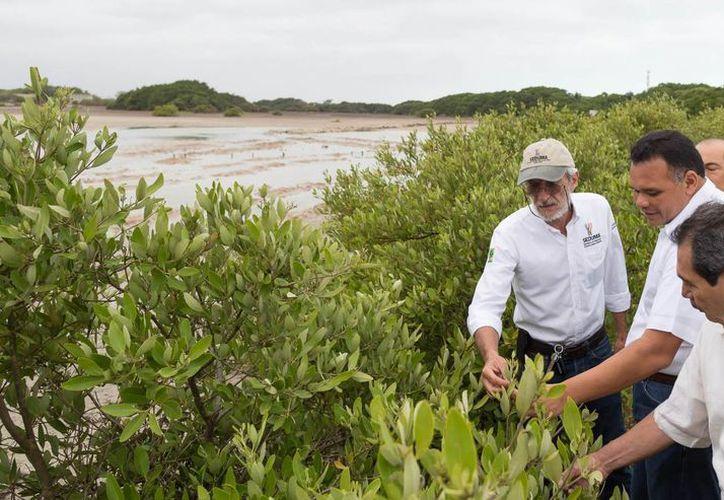 Eduardo Batllori (d), titular de Seduma, explicó que los daños ocasionados por la invasión humana a las áreas del mangle se ha ido reparando. (Foto cortesía del Gobierno de Yucatán)
