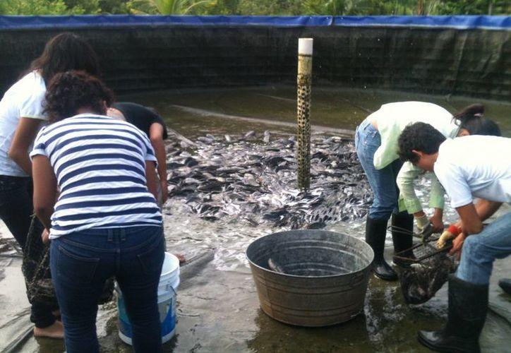 Las actividades de acuacultura se aplicarían en casi todo el municipio de Othón P. Blanco. (Harold Alcocer/SIPSE)