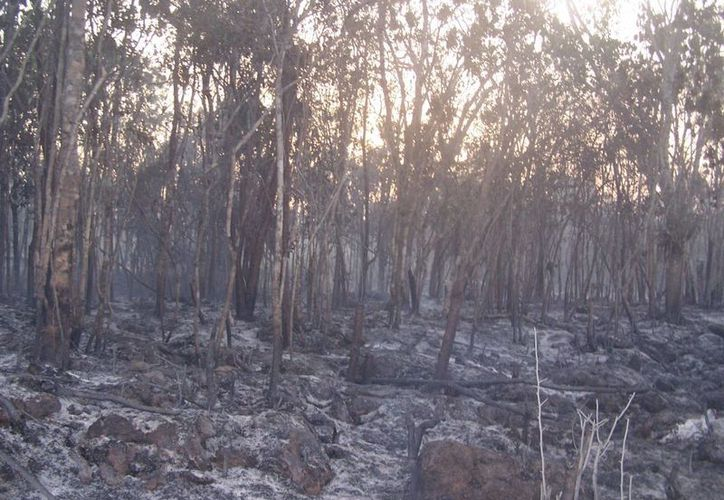 Este año se cinco incendios han consumido siete hectáreas de vegetación en Tulum.  (Rossy López/SIPSE)