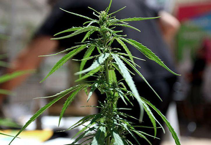 El Gobierno británico insiste en que no se trata de un primer paso para legalizar su uso recreativo. (Foto: globallookpress.com)
