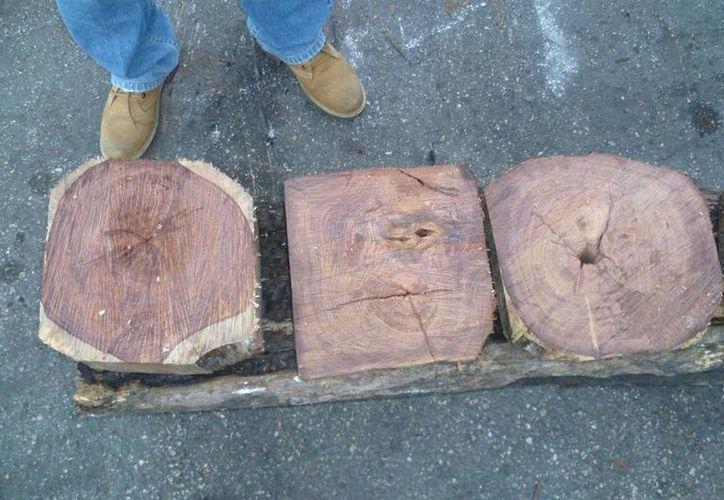 Este martes se impuso una multa de poco más de 300 mil pesos a un particular que pretendía con documentos falsos exportar desde Yucatán un cargamento de madera. (Milenio Novedades)
