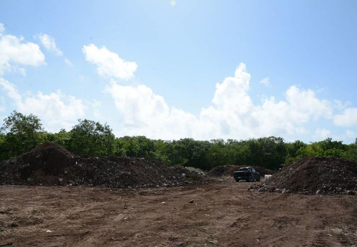 El proyecto consiste en secar el sargazo para después darle otro uso. (Victoria González/SIPSE)