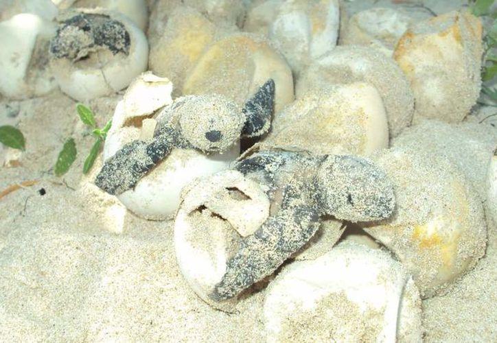 Los hechos ocurrieron en el 'El Tomatal', cerca de Puerto Escondido. (Notimex).