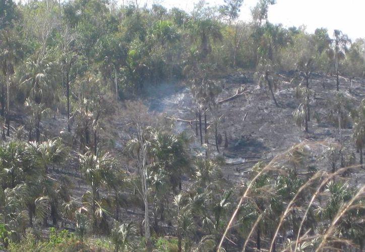 Los incendios han devastado hectáreas de vegetación arbustiva en Bacalar. (Javier Ortiz/SIPSE)