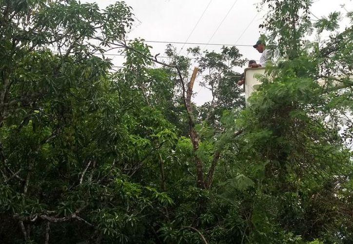 Se estarán realizando recorridos en colonias y recepcionando solicitudes por mantenerse aun en temporada de lluvias y huracanes. (Jesús Caamal/SIPSE)