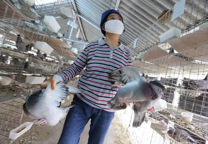El virus le costó a la industria avícola en total unos 6,500 millones de dólares desde finales de marzo. (Archivo/EFE)