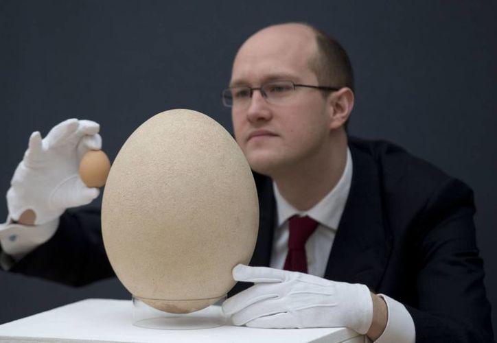 El ejemplar equivale al peso de 220 huevos de gallina. (Agencias)
