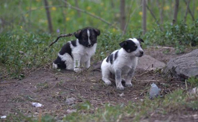 Varias organizaciones preocupadas por la suerte de los perros radiactivos han lanzado campañas. (Contexto)