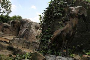 Zoológico de Chapultepec, 92 años de amor a los animales