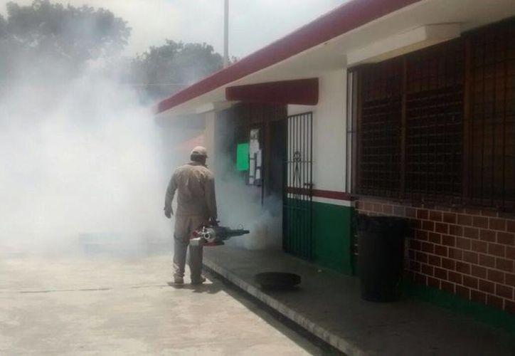 Continúan las brigadas de fumigación   en escuelas y patios de todo el Estado. (Paloma Wong/SIPSE)