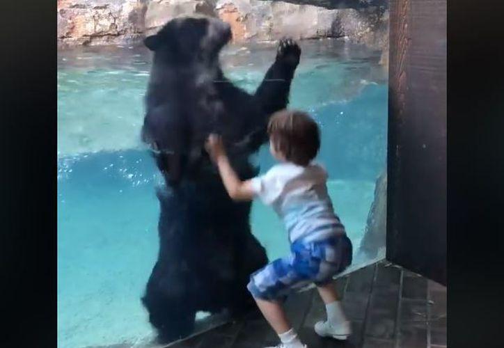 Las imágenes del niño y el oso, lograron conquistar el corazón de millones de internautas. (Captura)