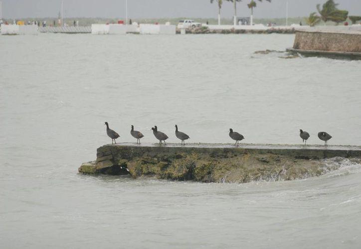 La Bahía de Chetumal es una de las zonas sensibles a sufrir afectaciones. (Archivo/SIPSE)