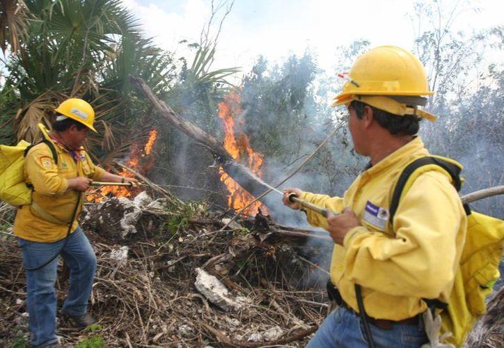 Combaten incendio en las inmediaciones del sindicato de taxistas Lázaro Cárdenas del Río. (Redacción/SIPSE)