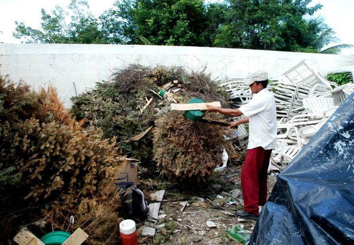 La ciudadanía podrá depositar su árbol natural en la Dirección de Ecología y Medio Ambiente. (Cortesía/SIPSE)