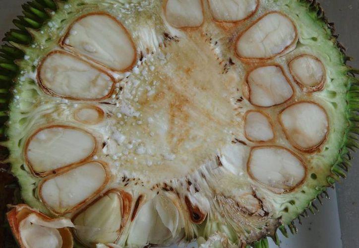 La yaca es rica en antioxidantes y fibra. También se utiliza para tratar el nerviosismo y deficiencias de calcio. (botanicalgarden.ubc.ca)