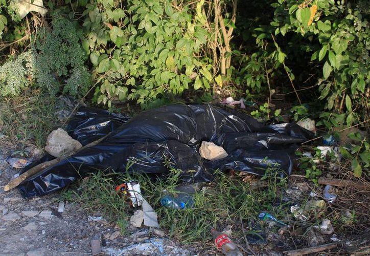 Se confirmó que el cuerpo del animal encontrado en las inmediaciones de Villas del Sol es de un jaguar. (Adrián Barreto/SIPSE)