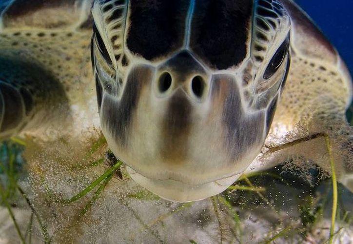 Esta foto la verán 90 millones de personas y llevará un poderoso mensaje de conservación. (Cortesía/SIPSE)