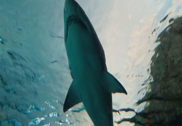 Morningstar decidió sacar su celular y grabar al inmenso animal. (Pixabay)