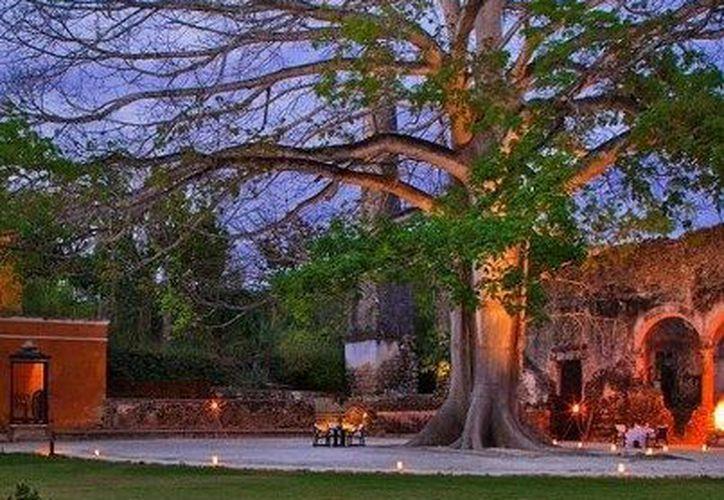 La majestuosa ceiba de hacienda Uayamón. (Facebook Campeche Country Club)