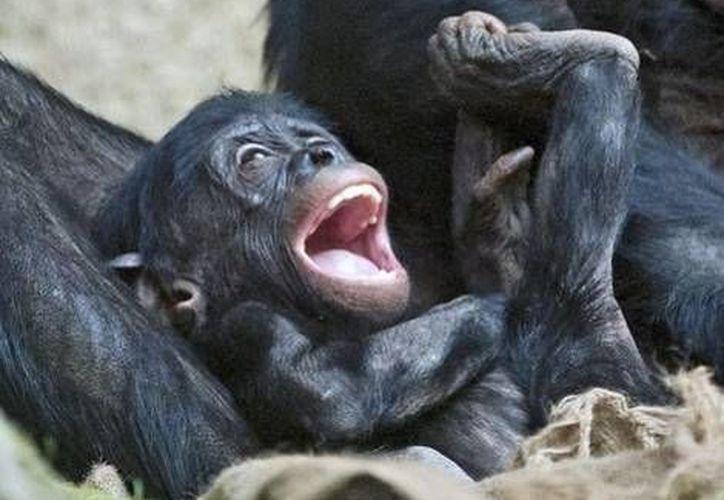 Cherri dio a luz a dos crías llamadas Thelma y Luise. (Agencias/Foto de contexto)