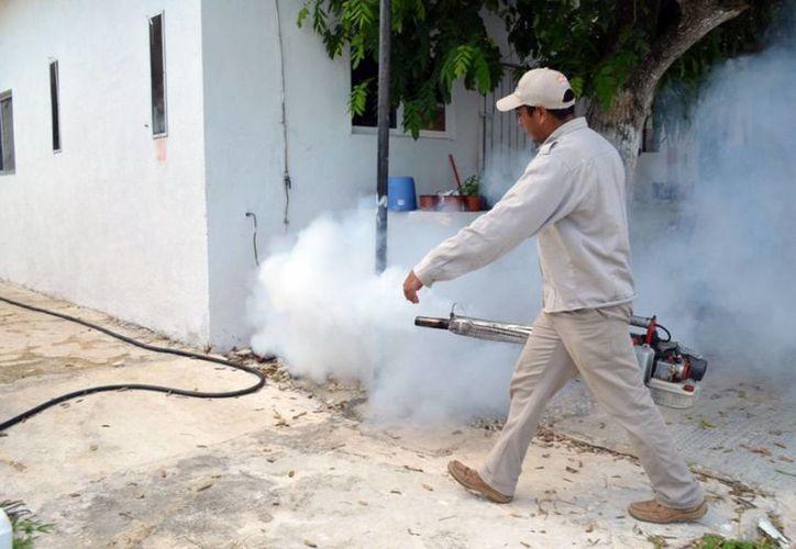 Se busca evitar que en los patios de los hogares se desarrollen plagas a partir de trastos que se llenan de agua. (Francisco Sansores/SIPSE)