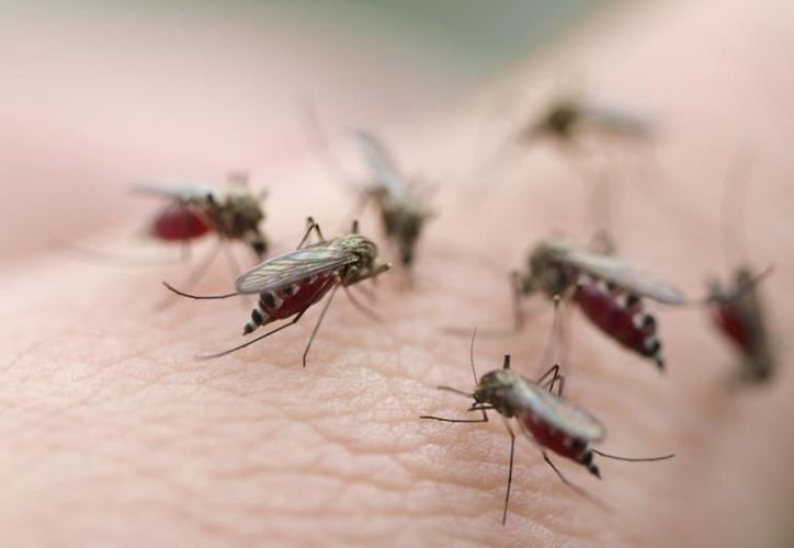 Es importante que en esta temporada de lluvias te prevengas de  los mosquitos. (Foto: aixmi.gr)