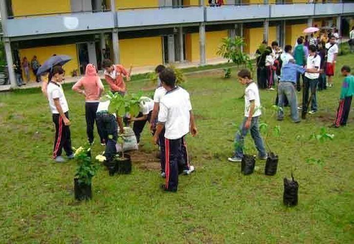 Los alumnos aprenderán sobre la educación ambiental con las estrategias de los maestros. (Contexto/Internet)