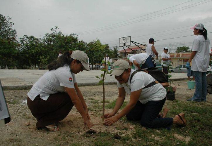 La Dirección de Ecología es la encargada de recepcionar las plantas que son removidas del lugar. (Tomás Álvarez/SIPSE)