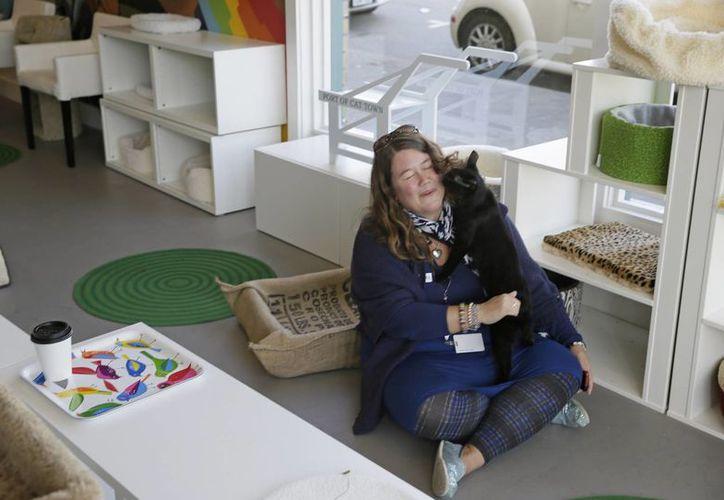 Cat Town Cafe está inspirado en la locura de los cafés felinos de Japón, donde muchas personas viven en diminutos apartamentos que no permiten mascotas. (Agencias)