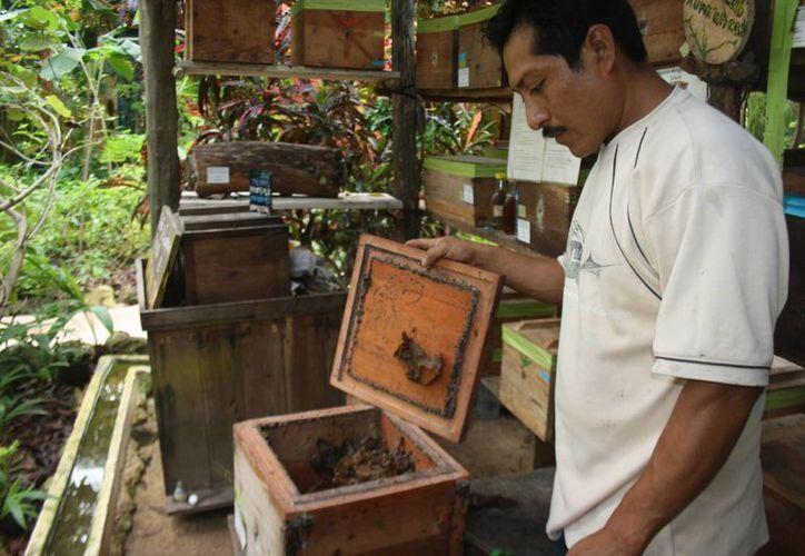 Hondzonot, Chanchén Palmar y Yaxché serán los poblados beneficiados.  (Sara Cauich/SIPSE)