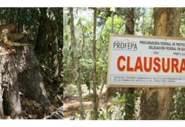 La Profepa clausuró actividades de aprovechamiento ilegal de materia prima forestal. (Agencias)