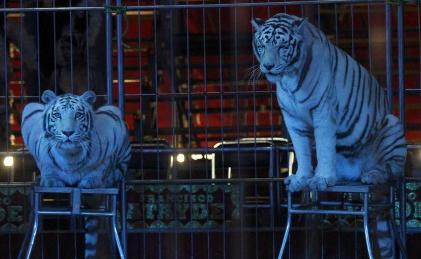 De acuerdo con reportes oficiales, el 80 por ciento de los animales que fueron 'registrados' por los circos -y que dejaron de 'utilizarse' para espectáculos- ya falleció. (Archivo/NTX)