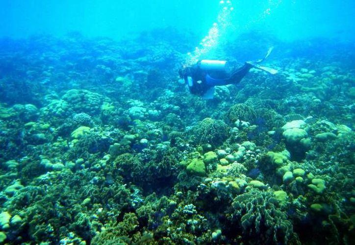 Logran la protección de casi la mitad del sistema arrecifal mesoamericano. (Redacción)